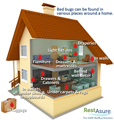 See where you might find bedbugs in a home